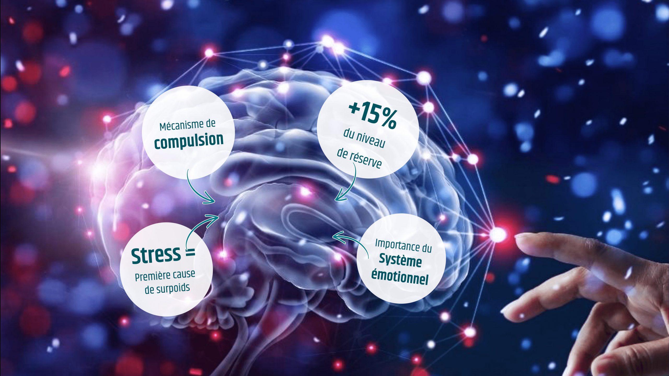 Apport neurosciences