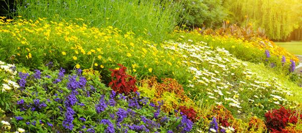 fleur vent jardin
